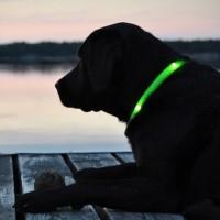 Кучешки LED нашийник