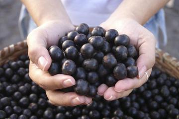 Acai Berries – последния писък на модата