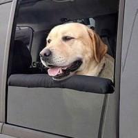 грижа за кучето в абтомобила